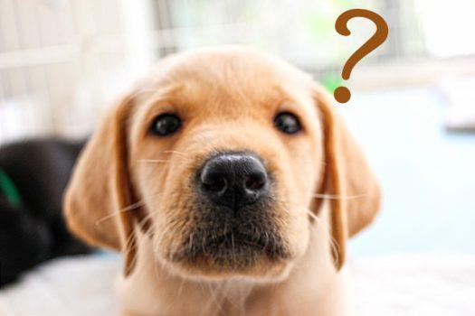 なぜ臭いの?ペットのにおい、主な原因