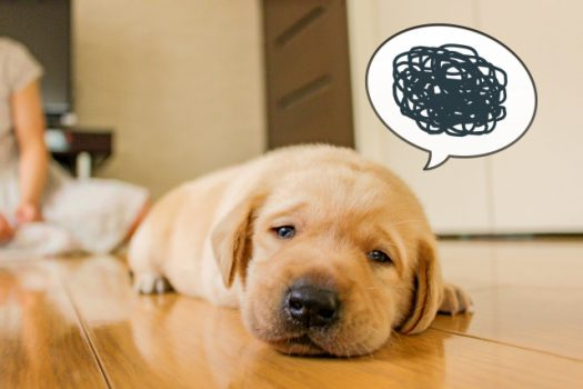 ペットの安全性を考える。消臭剤の種類と注意点