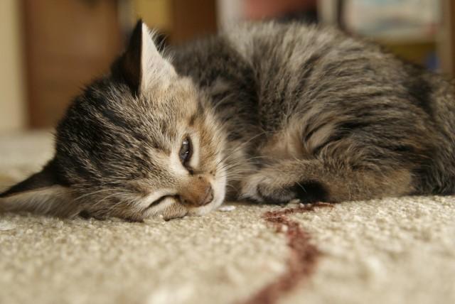 ペットの消臭剤やスプレー・置き型などおすすめアイテムで除菌&消臭
